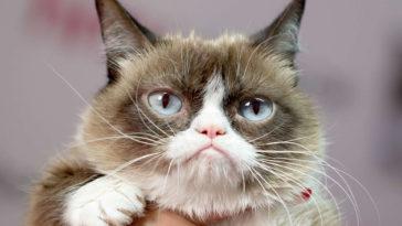 Grumpy Cat Memes Wallpaper