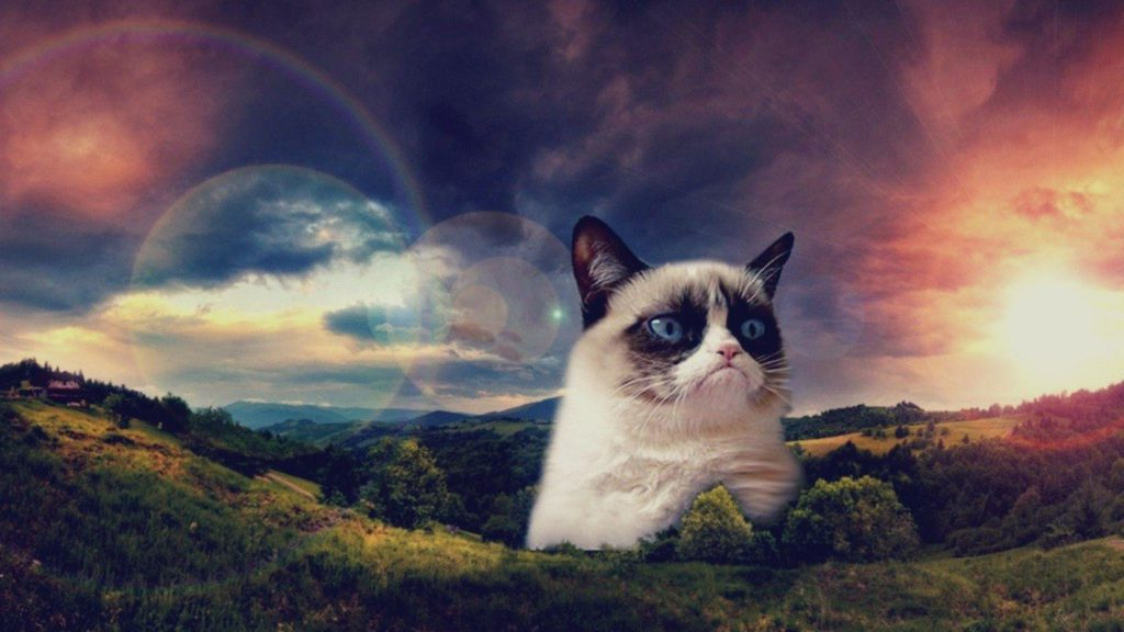 Grumpy Cat and Landscape